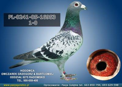 PL-0241-05-16953