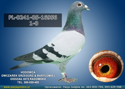 PL-0241-05-16956