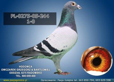 PL-0275-05-244