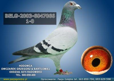 z-BELG-2003-6047066