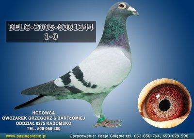 z-BELG-2005-6381244
