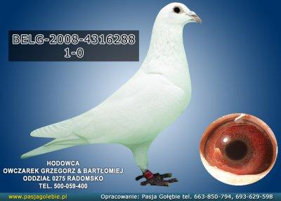 z-BELG-2008-4316288