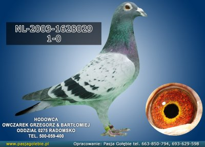 z-NL-2003-1628029