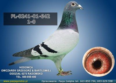 z-PL-0241-01-642