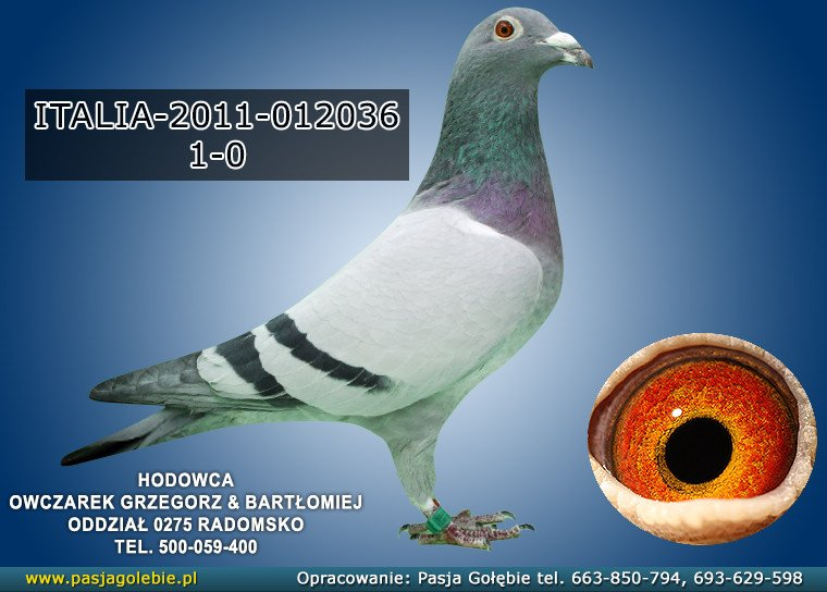 IT-2011-012036