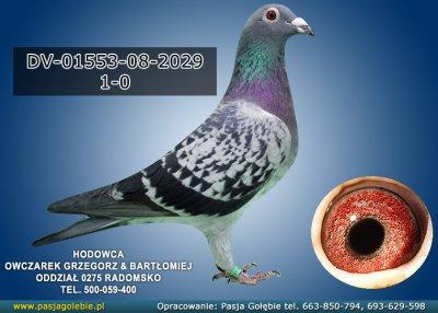 DV-01553-08-2029
