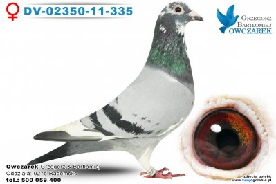 DV-02350-11-335-golab