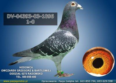 DV-04393-03-1096