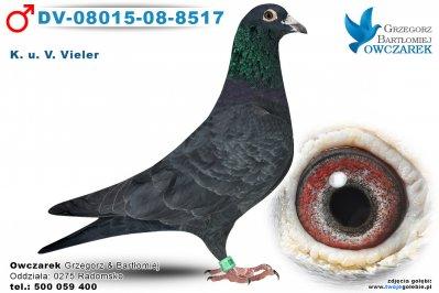 DV-08015-08-8517-golab