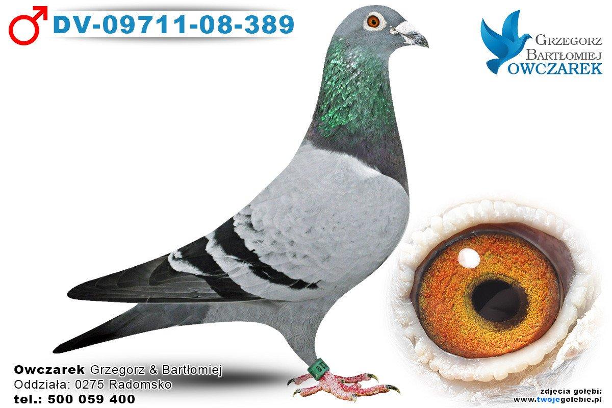 DV-09711-08-389