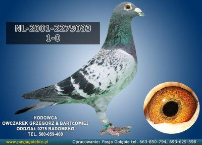 NL-2001-2275083