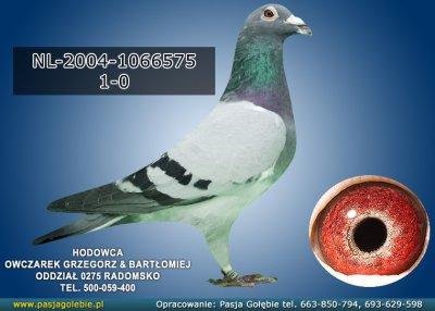NL-2004-1066575