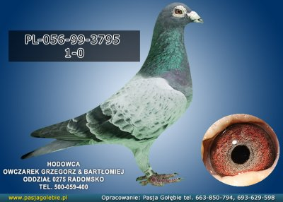 PL-056-99-3795