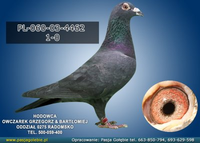 PL-060-03-4462
