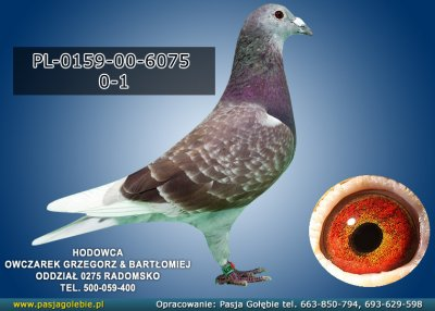 PL-0159-00-6075