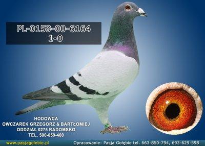 PL-0159-00-6164