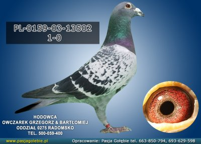 PL-0159-03-13502