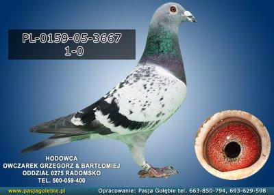 PL-0159-05-3667