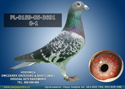 PL-0159-05-3691