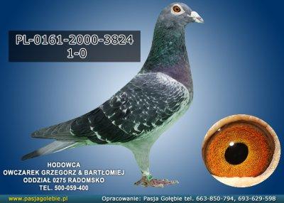 PL-0161-2000-3824
