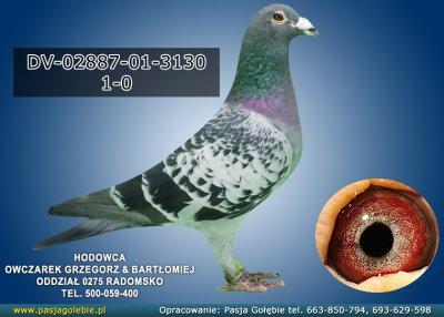 DV-02887-01-3130