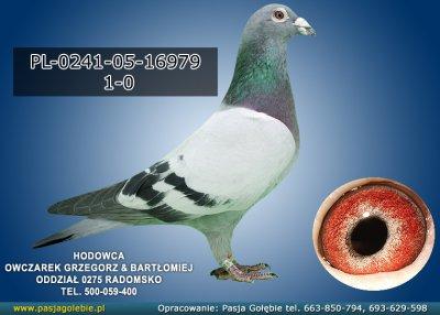PL-0241-05-16979
