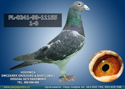 PL-0241-99-11155