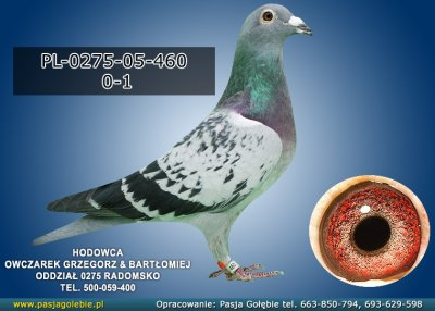 PL-0275-05-460