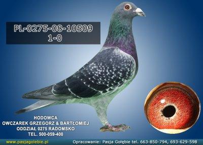 PL-0275-08-10509