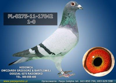 PL-0275-11-17042