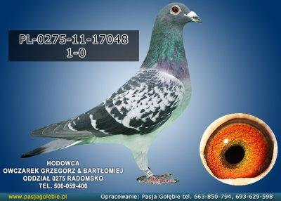 PL-0275-11-17048
