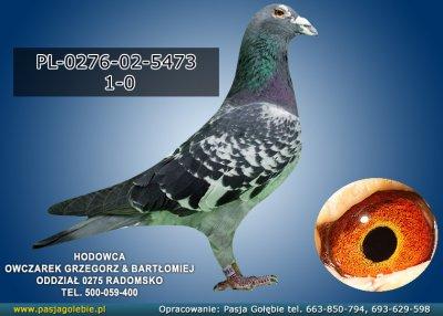 PL-0276-02-5473