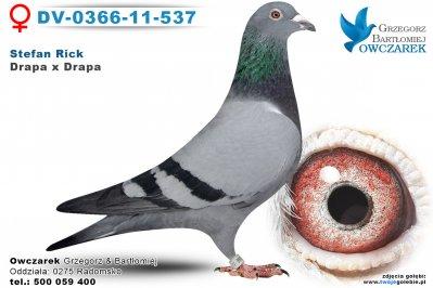 dv-0366-11-537