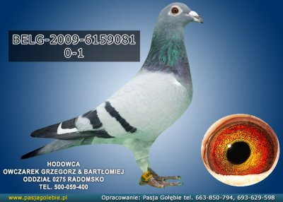 BELG-2009-6159081