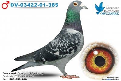 DV-03422-01-385-golab