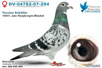 dv-04782-07-294-golab