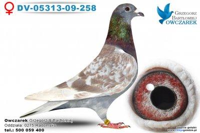 DV-05313-09-258-golab