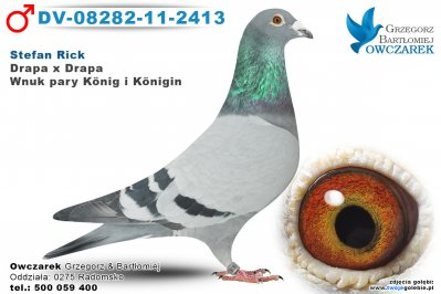 DV-08282-11-2413-golab
