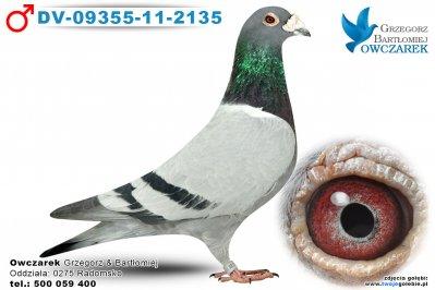 DV-09355-11-2135