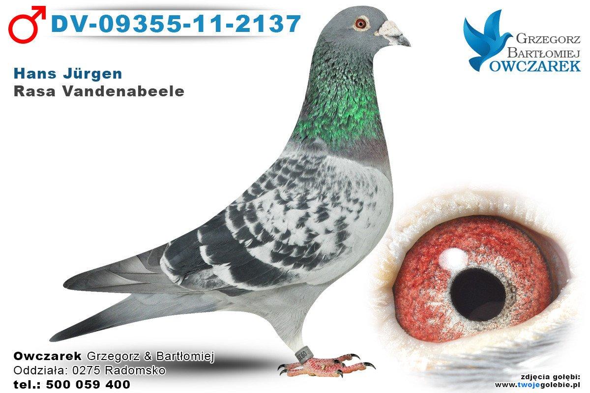DV-09355-11-2137-golab