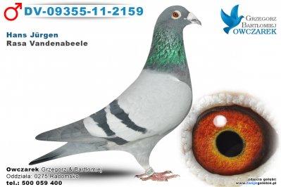 DV-09355-11-2159-golab