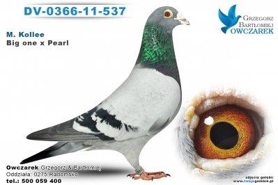 NL-2004-1069345-golab