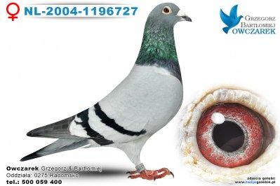 NL-2004-1196727-golab