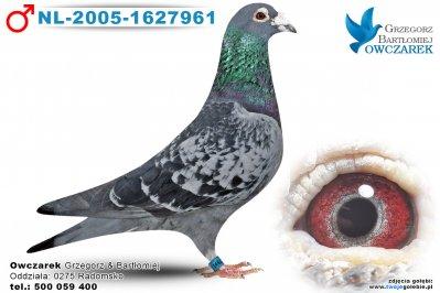 NL-2005-1627961