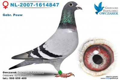 NL-2007-1614847-golab