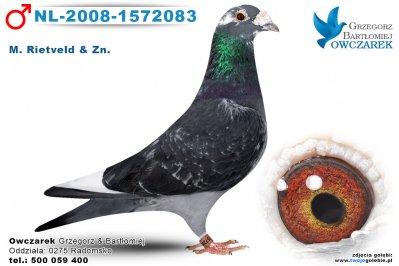 NL-2008-1572083-golab