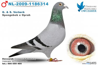 NL-2009-1186314-golab