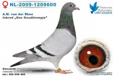 nl-2009-1209600-golab