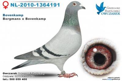 NL-2010-1364191-golab