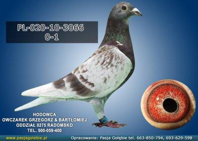PL-020-10-3066
